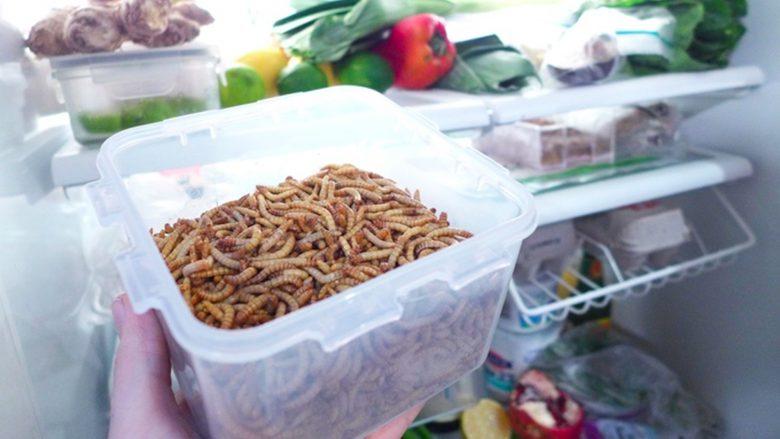 Nussig bis neutral - so sollen Mehlwürmer schmecken. © Livin Farms