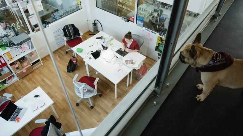 Mit Hund im Wiener Impact Hub. © Impact Hub