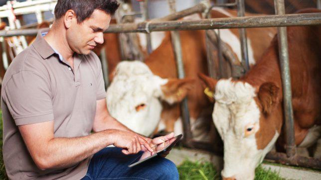 Smartbow Gründer Wolfgang Auer hebt die Rinderzucht ins digitale Zeitalter. ©Smartbow