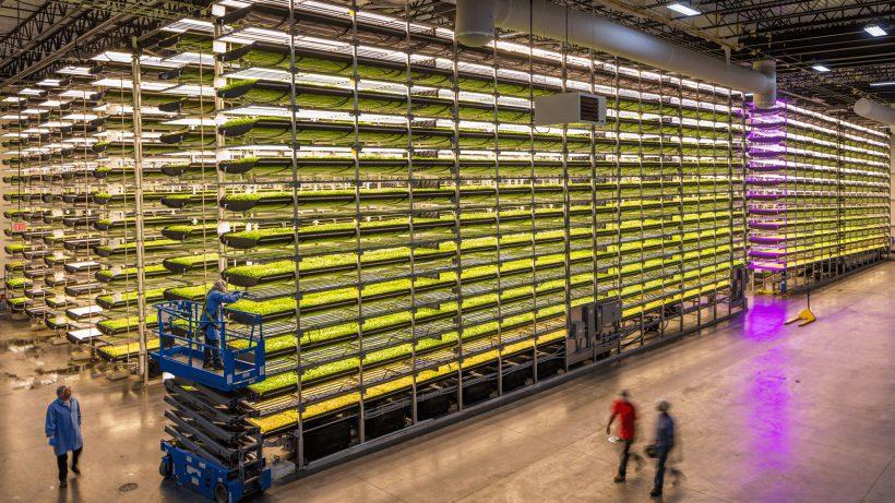 Vertical Farming bei AeroFarms. © AeroFarms
