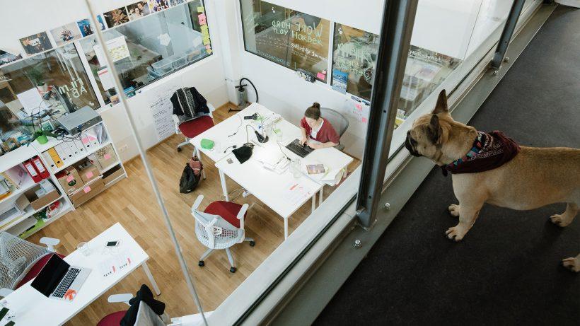 Zweibeiner und Vierbeiner im Impact Hub Vienna. © Ana Barros