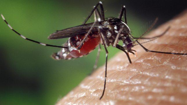Stechmücken übertragen Chikungunya-Virus. © Pixabay