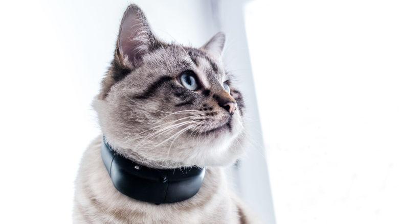 GPS-Ortungsgerät von Tractive für Katzen. © Tractive