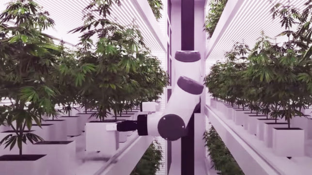 Roboter, die Cannabis ernten. © Seedo