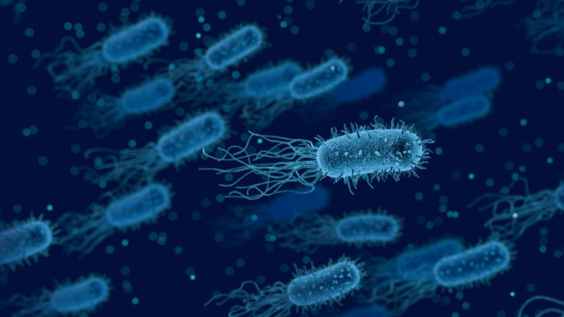 Illustration von Bakterien. © Bild von Arek Socha auf Pixabay