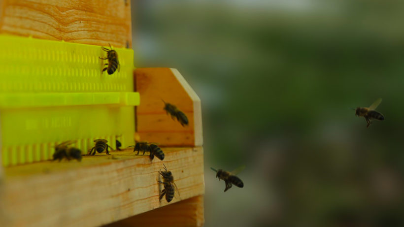 Die Bienenstockwaage von Beesaver. ©Beesaver