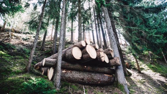 Vom Forstbetrieb bis zum Tischler: Eine Künstliche Intelligenz erkennt jedes Holzstück wieder © Photo by Markus Spiske on Unsplash