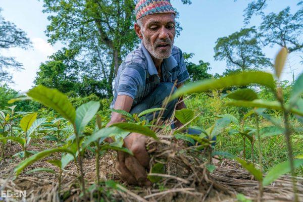 © Eden Reforestation projects