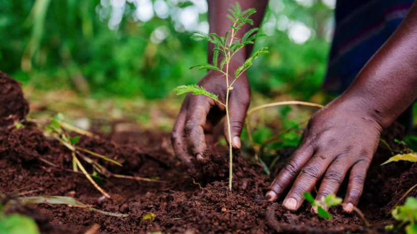 Setzling in Uganda 2020. © One Tree Planted