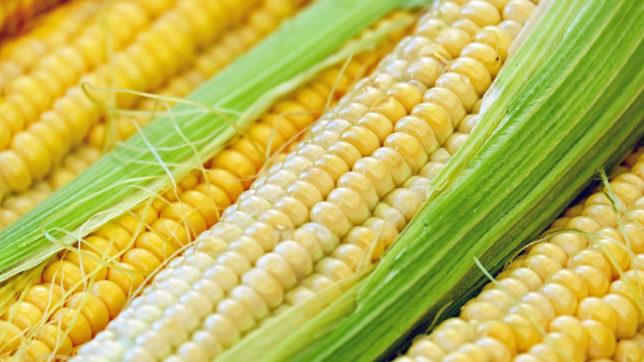 Mais: Cerealia verwandelt Getreide in NFTs © Couleur / Pixabay