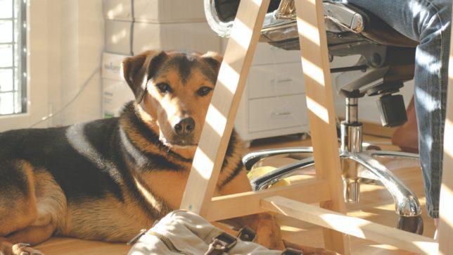 Hund im Büro. © Lum3n von Pexels