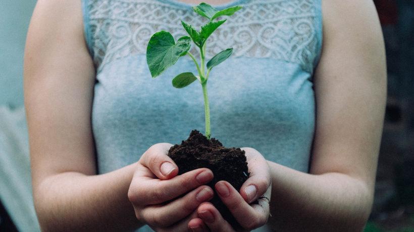 """Wachstum: """"Grow"""" von Deloitte hilft nachhaltigen Startups © Nikola Jovanovic on Unsplash"""